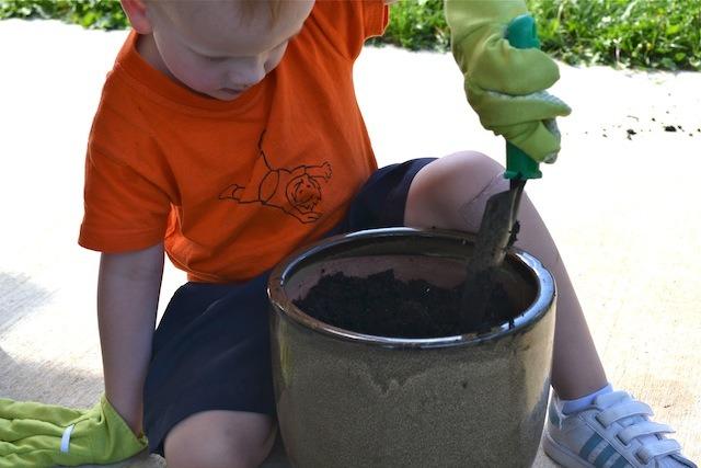 Caspar digging hole for mint plant