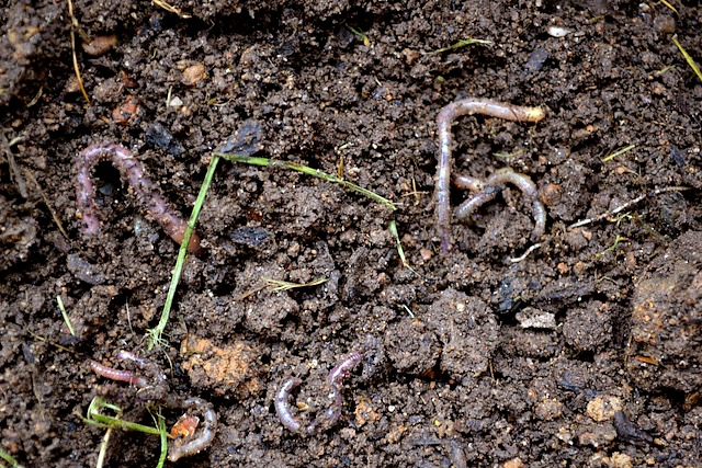 Worms in our garden