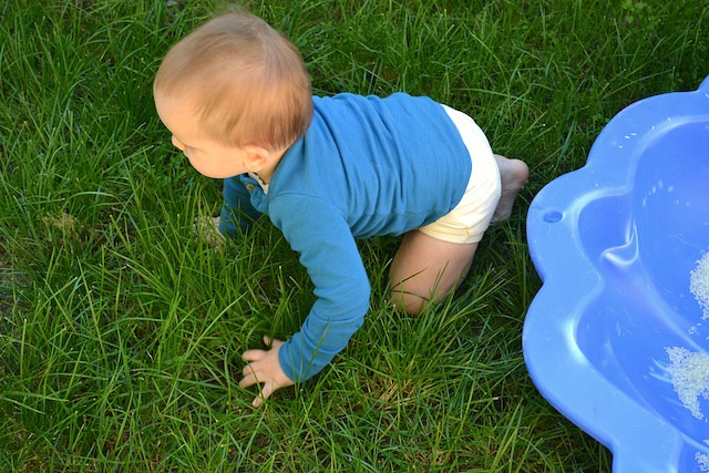 Otis crawling on grass