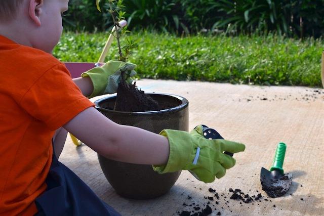 Caspar planting mint plant