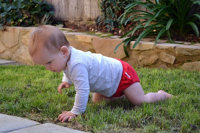 Otis crawling outside
