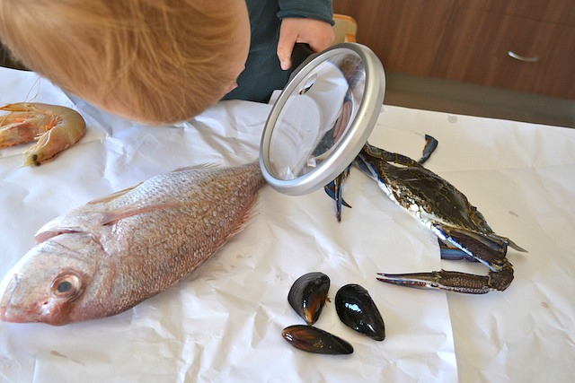 Caspar with magnifying glass and blueswimmer crab