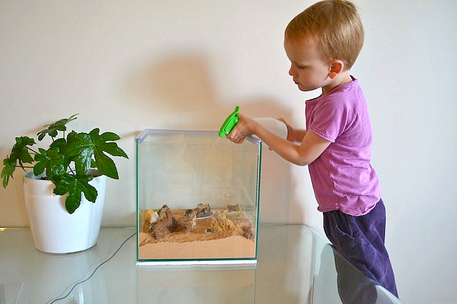 Pets For Children How About Hermit Crabs How We Montessori
